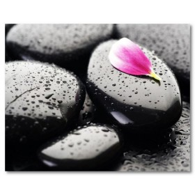 Αφίσα (ροζ, λουλούδι, πέταλο, επί, μαύρο, πέτρες)